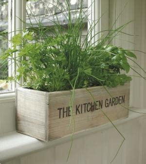 plante aromatique cuisine les joies des aromates en cuisine des cuisines aviva