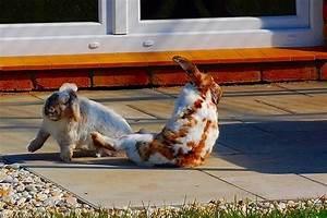 Was Kann Man Auf Dem Balkon Verlegen : die f nf schlimmsten fehler die man als kaninchenhalter machen kann haltung pflege ~ Bigdaddyawards.com Haus und Dekorationen