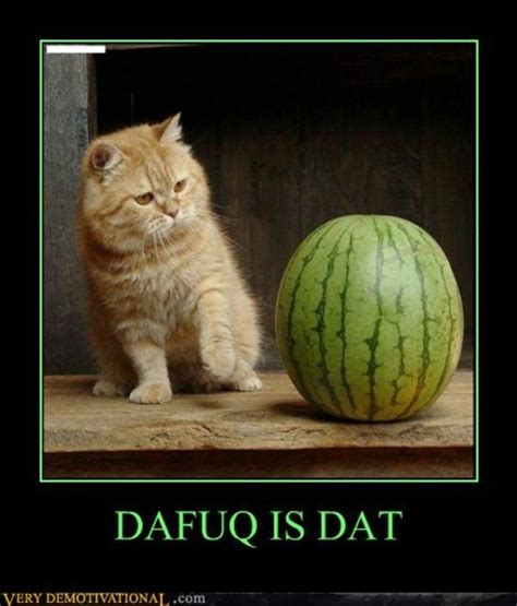 Dafuq Meme Images - image 290835 dafuq know your meme