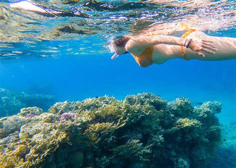 bbq luxury snorkeling tour fajardo east island excursions