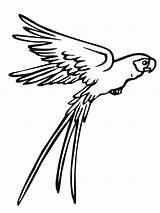 Parrot Coloring Pages Flying Printable Bird sketch template