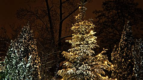 file glowing tree lights in the winter jpg
