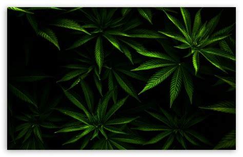 marijuana wallpapers  cell phones wallpapersafari