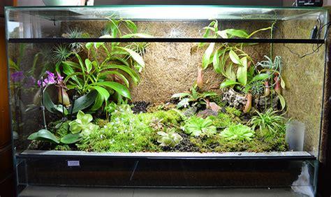 plantes carnivores le terrarium