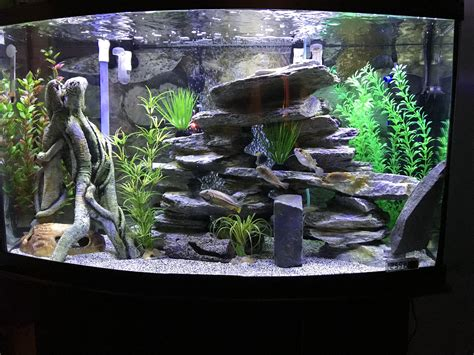 Aquascaping Cichlid Aquarium by Pin By Christopher Luciano On Cichlid Tank Exles