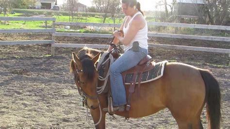 horse ride training quarter arab