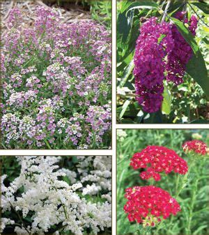 79 Best Gardens Plants Deer Don't Eat Images On Pinterest