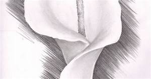 """Lily Flower Drawing 
