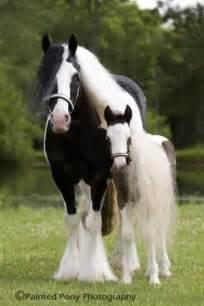 Baby Gypsy Vanner Horses