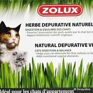 Herbe à Chat : herbe chat ~ Melissatoandfro.com Idées de Décoration