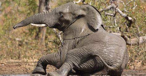 Dangerous Animal Wallpaper - animals wallpapers dangerous animals