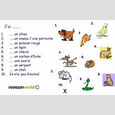 Pets  Gcserevision, French, Everydaylife, Pets  Revision World