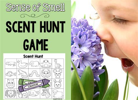 smell activities for preschool 5 senses scent hunt prekinders 569