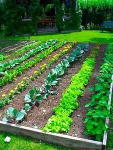 Rustic Vegetable Garden Ideas - Modern Home Exteriors