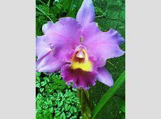 Cultivo de Orquideas en casa Plantas, flores, jardines