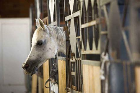 horse laminitis heaves thehorse horses prognosis stall sheds vs barn stalls run head survivor depends manage worst him true medicine