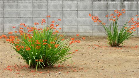 japanese plants image gallery japanese plants and flowers