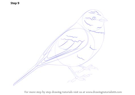 step  step   draw  yellowhammer