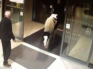 Horse captured on CCTV wandering into Cheshire police ...