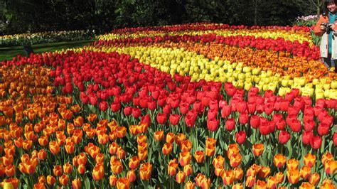 wisata ladang bunga terindah luar negeri  menakjubkan