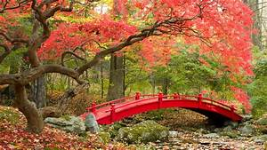 Wallpaper Autumn, Maple trees, Japanese Garden, 4K, Nature ...