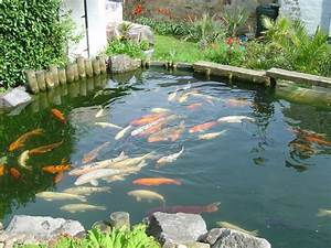 Mon jardin aquatique FRED L'APICULTEUR Exometeofraiture