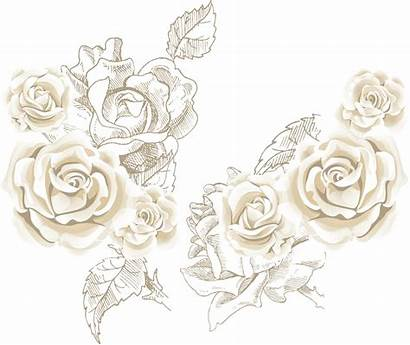 Rose Flower Roses Clip Background Vector Clipart