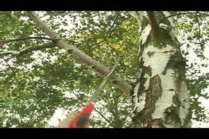 Bäume Beschneiden Jahreszeit : video birke schneiden das sollten sie beachten ~ Yasmunasinghe.com Haus und Dekorationen