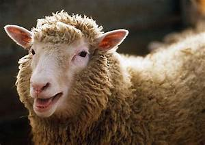 Ovine Dolly the Sheep Clone Passes Away at Young Age ...