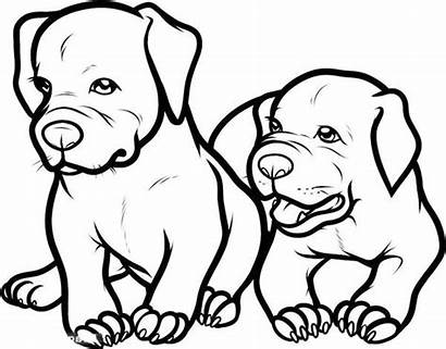 Pitbull Coloring Pages Dog Puppy Nose Drawing