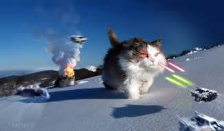 cat war wars cats i ve got a bad feline about this