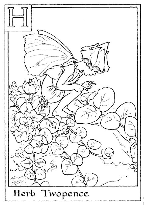 print letter   herb twopence flower fairy coloring page digi images