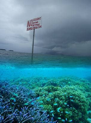 marine protected area networks wwf