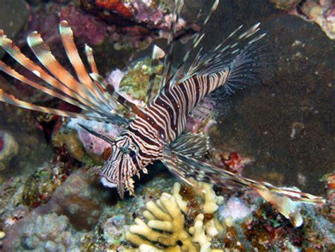 plong 233 e 224 marsa shagra egypte eau de mer divers aquarium webzine l aquariophilie d eau