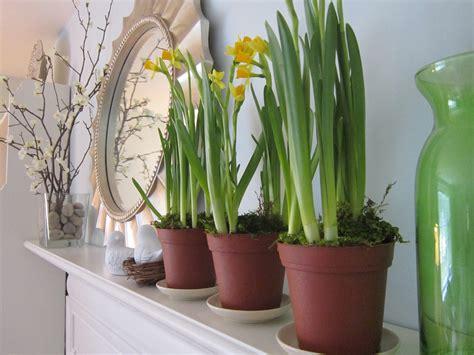 Amazing Houseplants For Indoor Decoration Nationtrendz Com Home Decorators Catalog Best Ideas of Home Decor and Design [homedecoratorscatalog.us]
