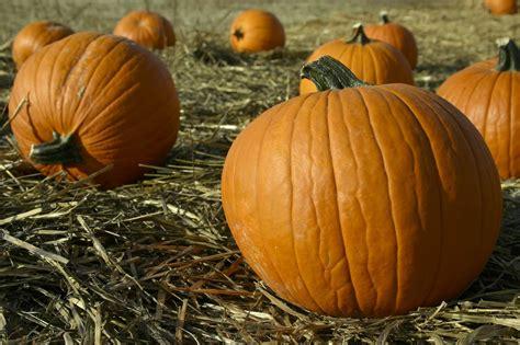 Colorado Pumpkin Patches 2017 by Colorado Garden Punch List October 2016