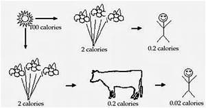 #142 Food chain and energy efficiency | Biology Notes for ...
