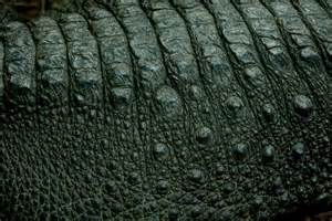 Alligator Skin Texture
