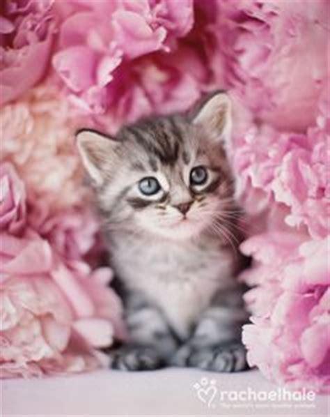 rachael hale photography cats images