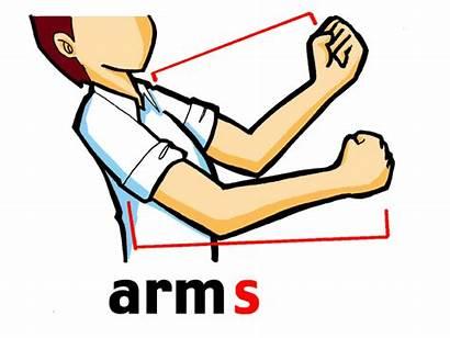 Parts Arms Corpo Imprimir Imagens Human