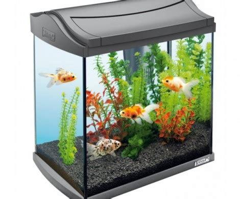 fische kleines aquarium kleines aquarium als beruhigendes element in die wohnung integrieren