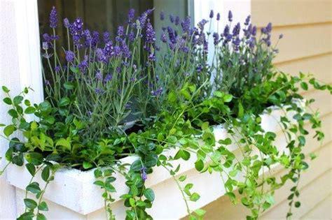 de beste vaste planten te planten  bloembakken