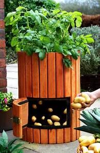 original wooden potato barrel h60cm x d35cm by lacewing