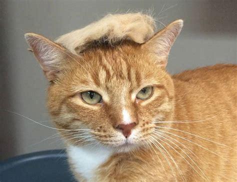 trump cats donald cat thing nieuwe