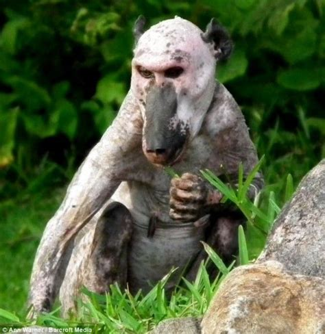 Hairless Bear Meme - 10 images about hairless animals on pinterest zimbabwe rats and templates free