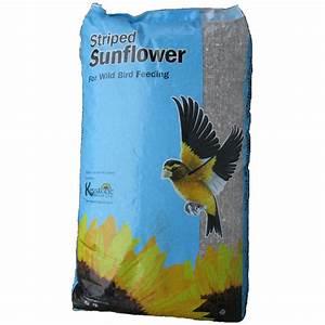 Graines De Tournesol Pour Oiseaux : graines de tournesol pour oiseaux 50 lbs rona ~ Farleysfitness.com Idées de Décoration