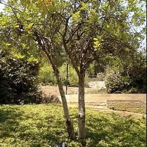 Oskar Schindlers tree at Yad Vashem | WWII: Schindler's ...