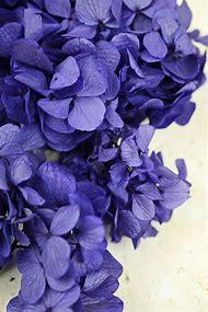 Preserved Purple Hydrangea Flowers 2 oz., …