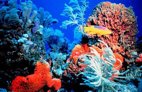 Coral reef - SEG Wiki