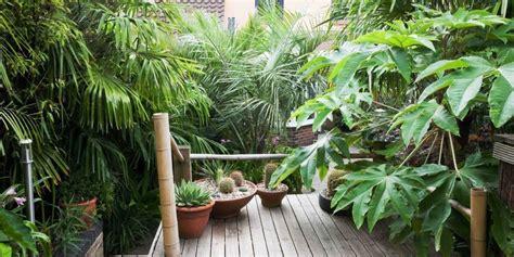 tropical plants   grow   uk garden ideas